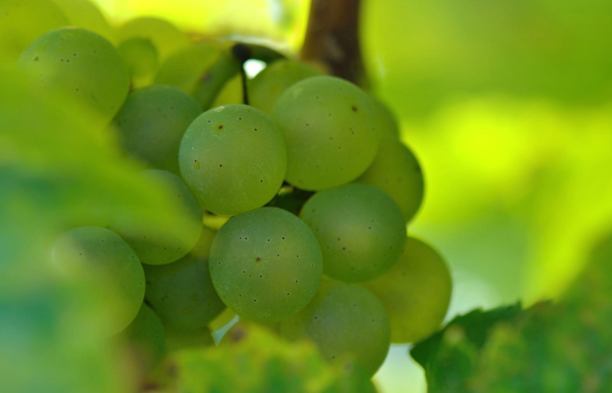 Filière vin / Veille mensuelle juin 2020